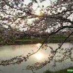 #10【介護中の桜&お団子&お散歩】