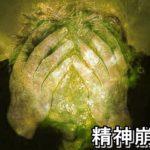 #25【薬の飲み合わせ 幻覚 幻聴 意識低下 精神崩壊!!(13)】
