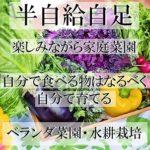 家でもできるベランダ栽培・水耕栽培野菜をつくる自給自足の生活